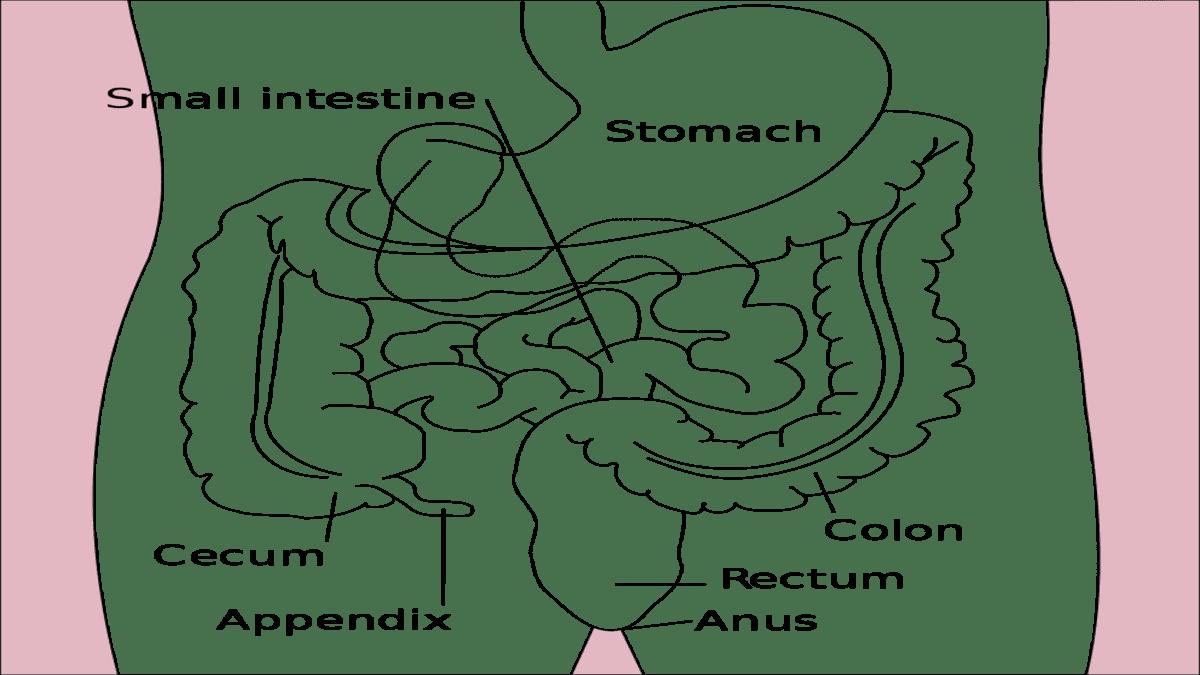 tuliskan proses pencernaan yang terjadi dalam lambung usus halus dan usus besar